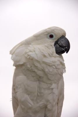 Joel's Exotic Parrot For Events And Parties | Oceanside, CA | Animals For Parties | Photo #21