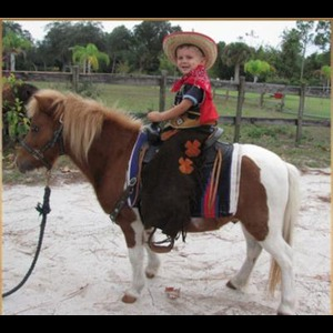 Florida Pony Rides | A+ Ponies For Parties