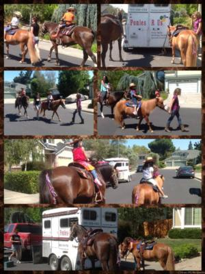 Ponies R Us | Martinez, CA | Pony Rides | Photo #14