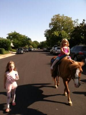 Ponies R Us | Martinez, CA | Pony Rides | Photo #8