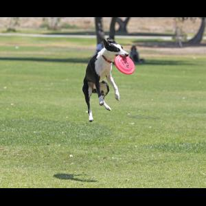 Sky High Flying Canines - Animal For A Party - Huntington Beach, CA