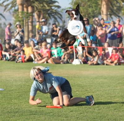 Sky High Flying Canines | Huntington Beach, CA | Animals For Parties | Photo #3