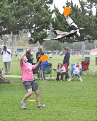 Sky High Flying Canines | Huntington Beach, CA | Animals For Parties | Photo #1