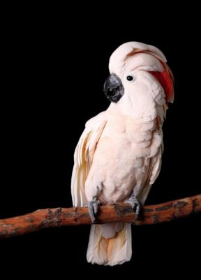 partyparrots | Palm Bay, FL | Animals For Parties | Photo #22
