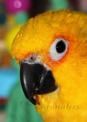 partyparrots | Palm Bay, FL | Animals For Parties | Photo #7