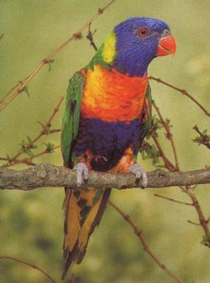 partyparrots | Palm Bay, FL | Animals For Parties | Photo #21