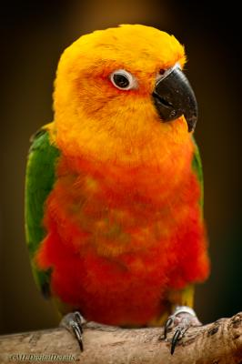 partyparrots | Palm Bay, FL | Animals For Parties | Photo #20