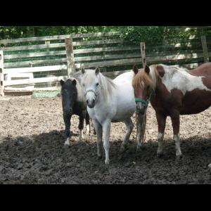 Runabout Farm Pony Rides & Petting Zoo - Pony Rides - Stamford, CT