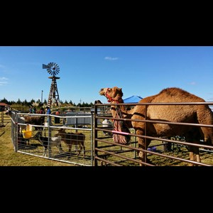 Cylinder Animal For A Party | Whitley Acres Exotic Ranch & Stables