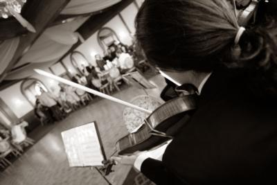 Golden Scroll Soloists  | Hartford, CT | String Quartet | Photo #9