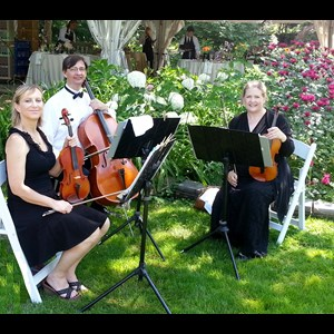 Frost String Quartet | All Trillium Ensembles
