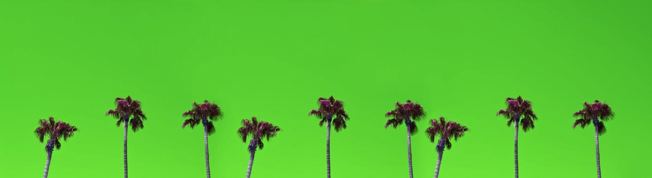 Palm Tree Photo Booth